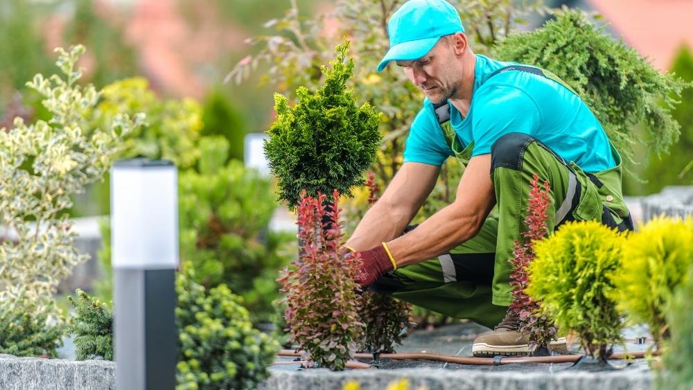 Cuida tu jardín durante el verano.