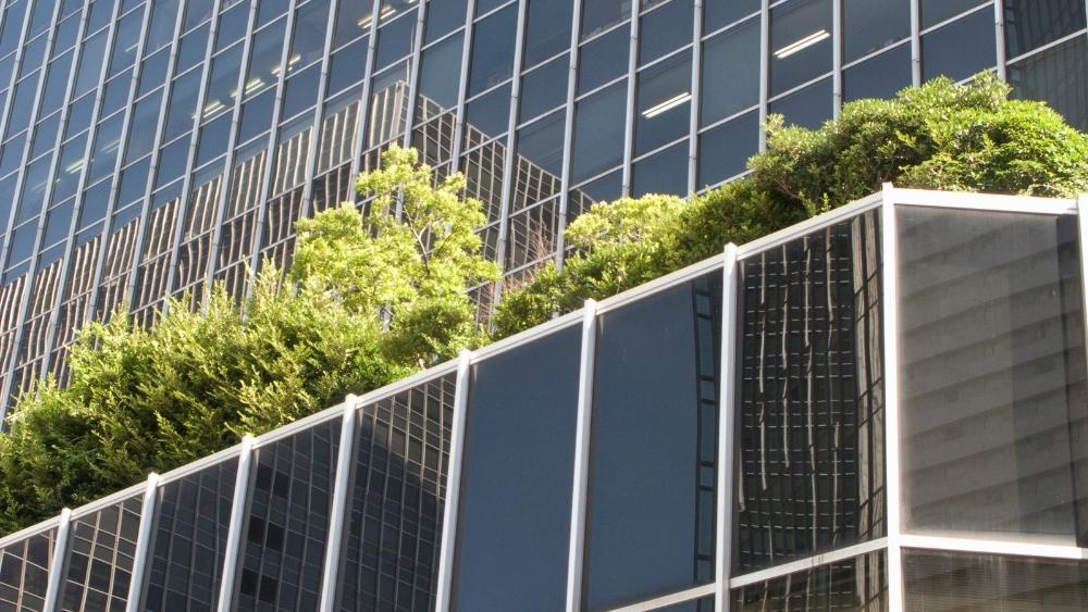 Cubiertas vegetales en el centro de las ciudades para hacerlas más sostenibles.