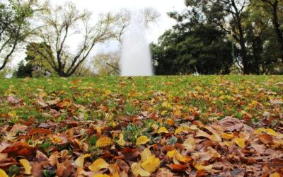 Cómo preparar y mantener tu jardín con la llegada del otoño.
